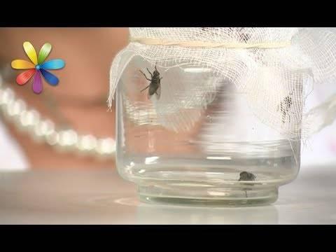 Как безопасно и эффективно избавиться от плодовой мушки в квартире?