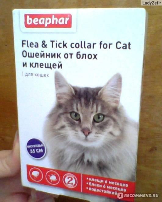 Ошейник от блох для кошек: виды и эффективность