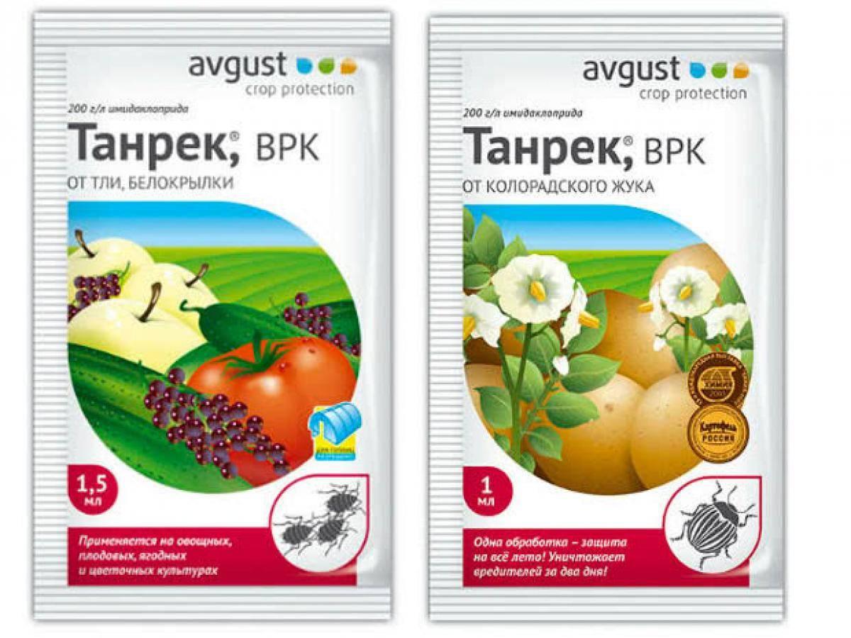 Мощный и эффективный: препарат танрек от колорадского жука и белокрылки