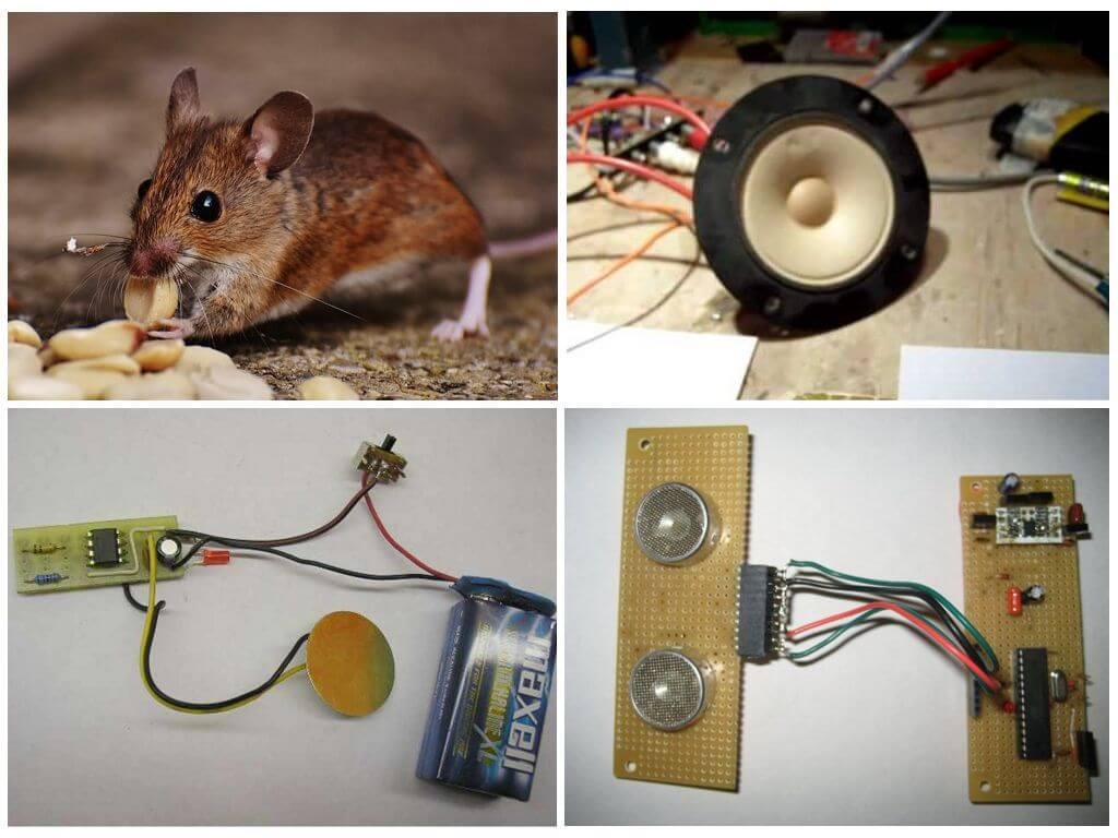 Как сделать ультразвуковой отпугиватель крыс и мышей своими руками?