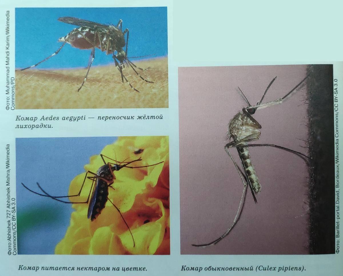 Как нас в темноте находят комары физика. как видят комары и что их привлекает к человеку. чем именно человек привлекает комара