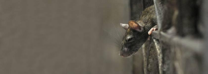 5 утеплителей, которые не грызут мыши