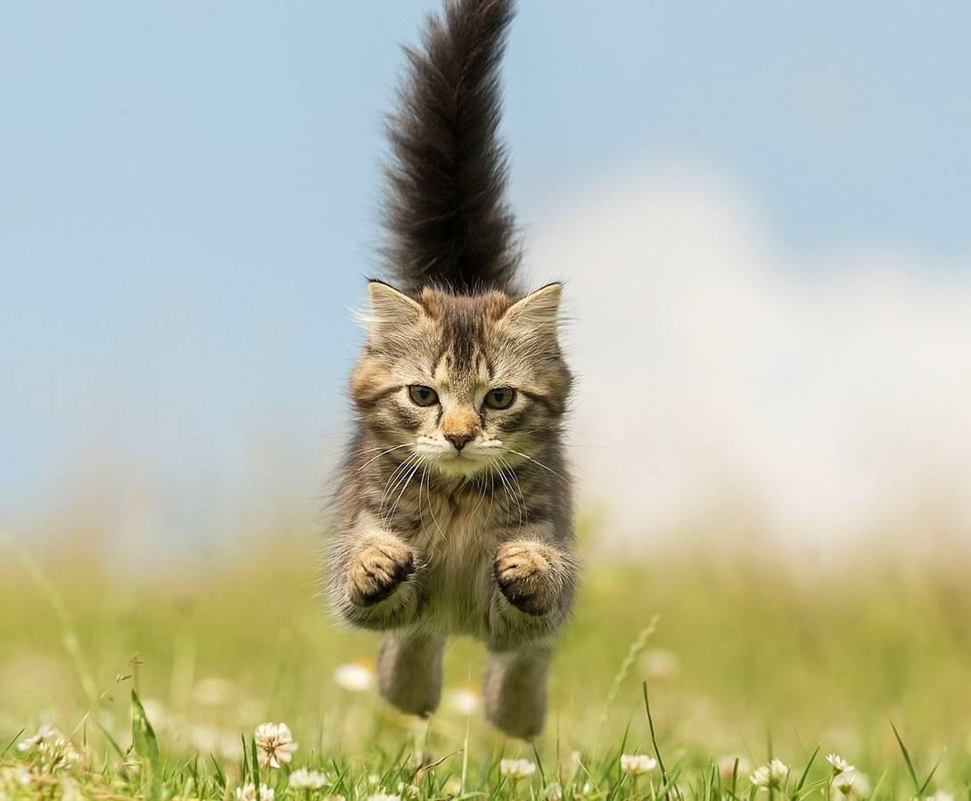 Помогают ли капли избавиться от блох у домашних животных