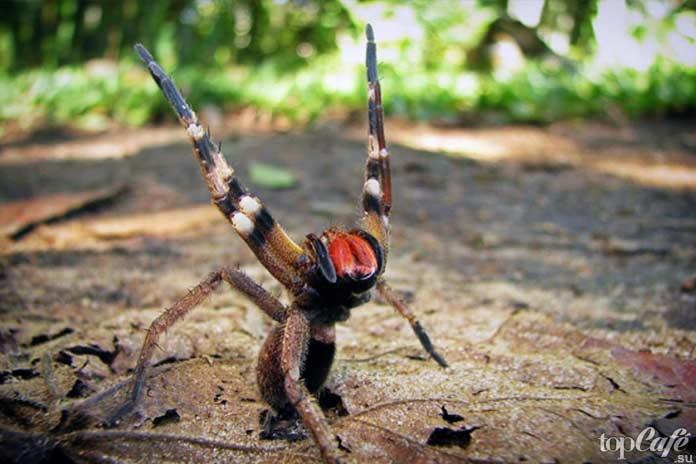 Описание и фото пауков краснодарского края