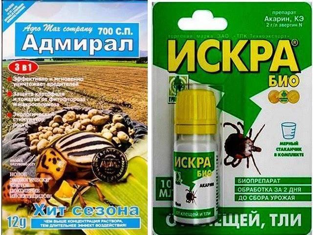 Долгоносик на клубнике — как бороться с вредителем, чем обрабатывать клубнику и средства для избавления от насекомых (105 фото)