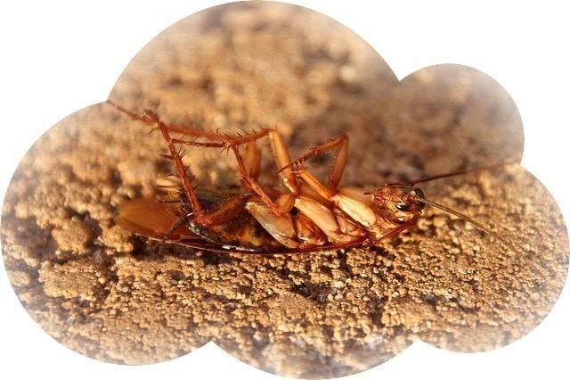 К чему снятся тараканы во сне женщине: замужней, незамужней, беременной, зрелой, девушке – толкование по сонникам