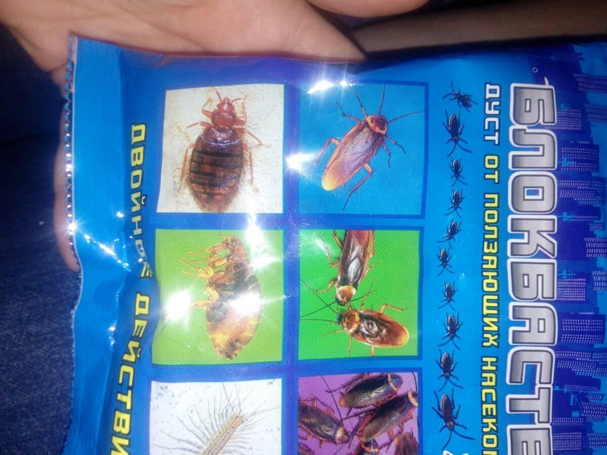 Дуст от тараканов — действие, эффективность, способы обработки