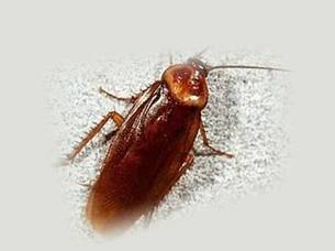 Лямбда зонда от тараканов