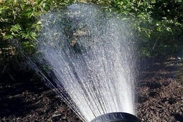 Как бороться с паутинным клещом на смородине – обработка, препараты, народные средства, отзывы садоводов и агрономов