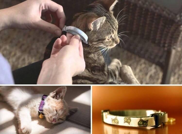 Как правильно подобрать кошке противоблошиный ошейник?