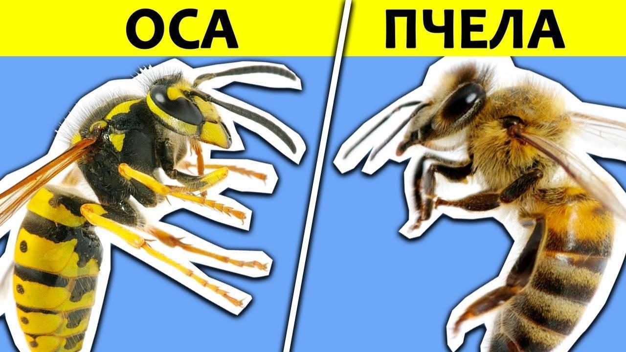 Слепень и овод: отличия между похожими насекомыми
