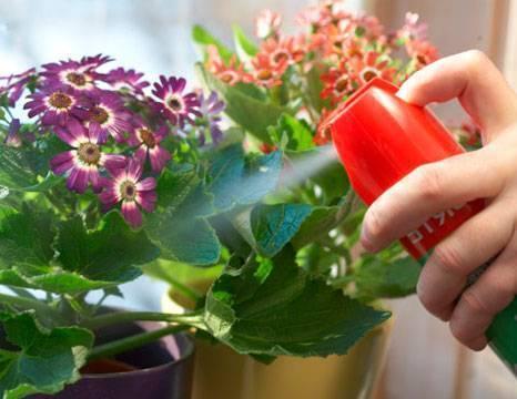 Почему появились мошки в цветочных горшках и как с ними бороться правильно
