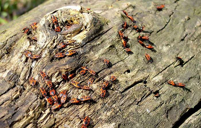 Места обитания клопов – как обнаружить насекомых в квартире