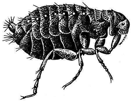 Названия насекомых: видовое богатство