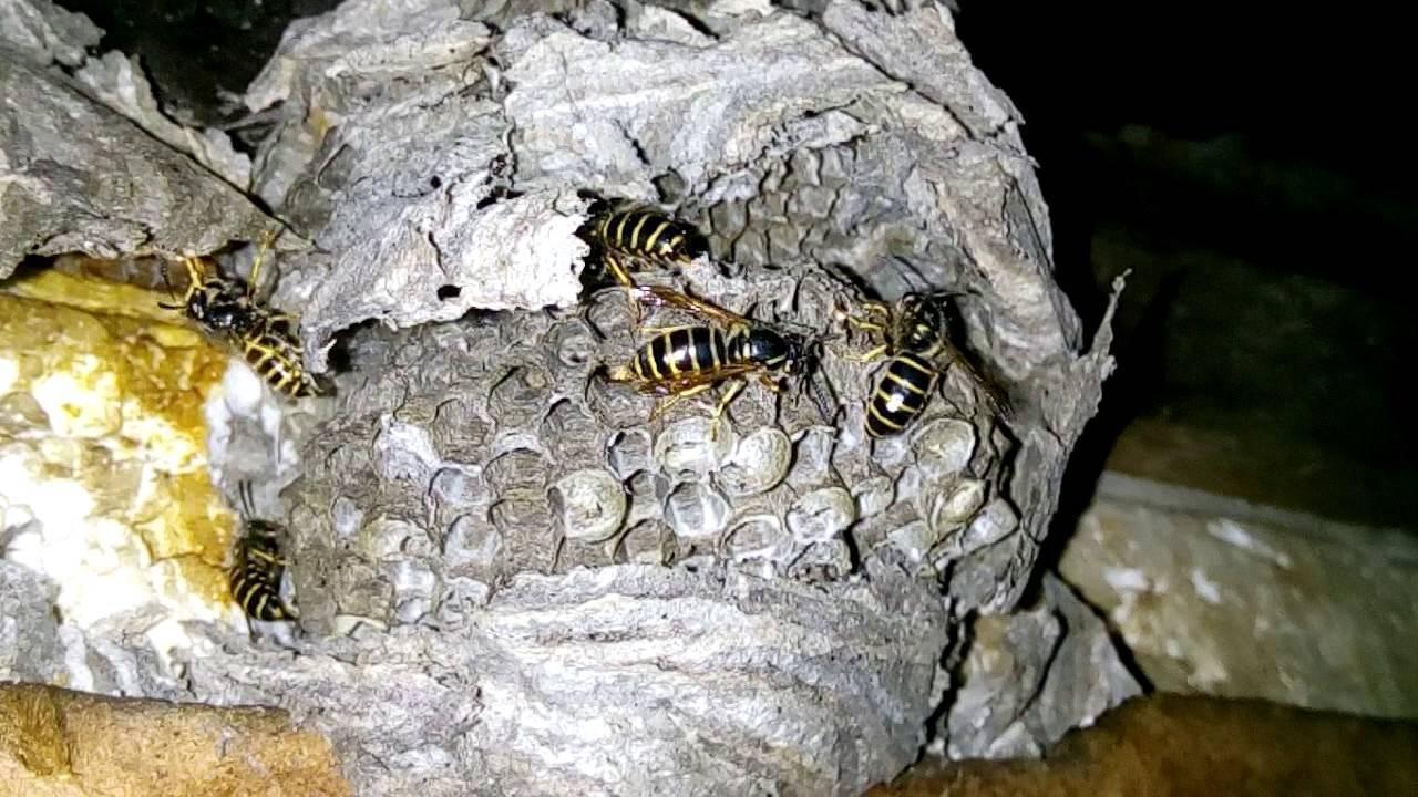 Земляные пчелы — как избавиться