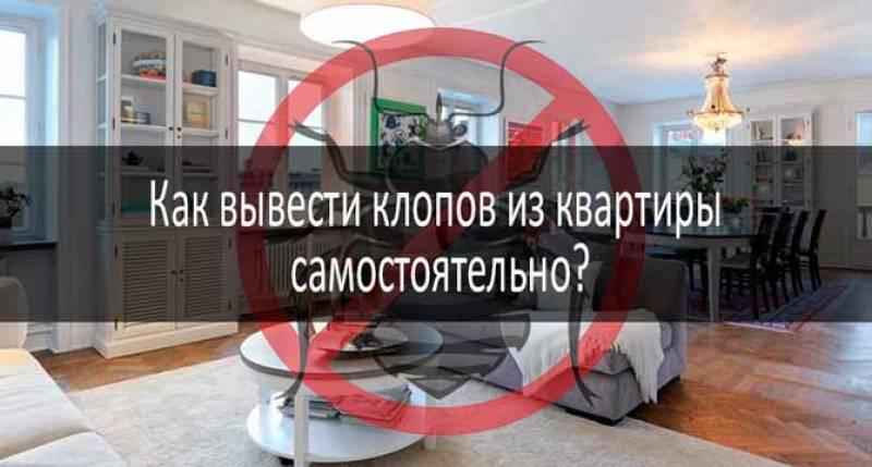 «чистый дом» против постельных клопов