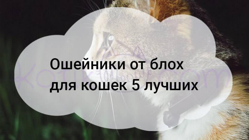 Обзор на средства от блох для кошек