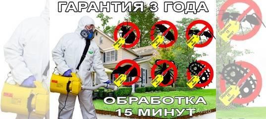 Среда обитания пылевых клещей в домашних условиях. как избавиться от паукообразных?