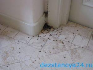 Откуда берутся домашние муравьи в квартире или доме? как заводятся, где обитают, как с ними бороться