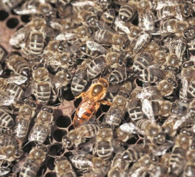 Как устроить пчел на зимовку