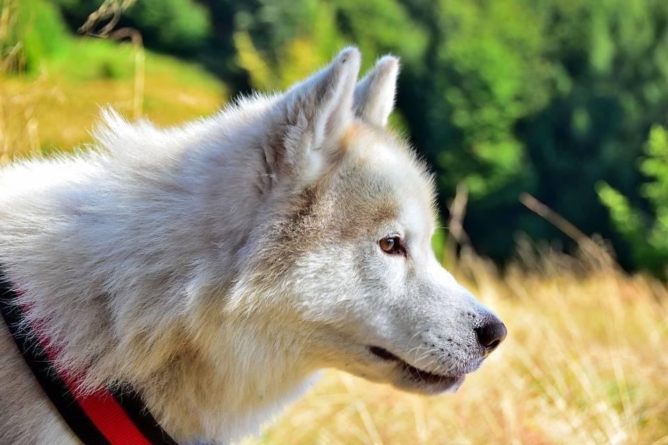 Осторожно клещи. собаку укусил клещ—как спасти любимца