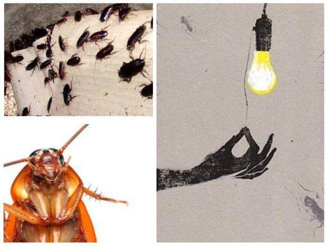 Чем можно испугать таракана
