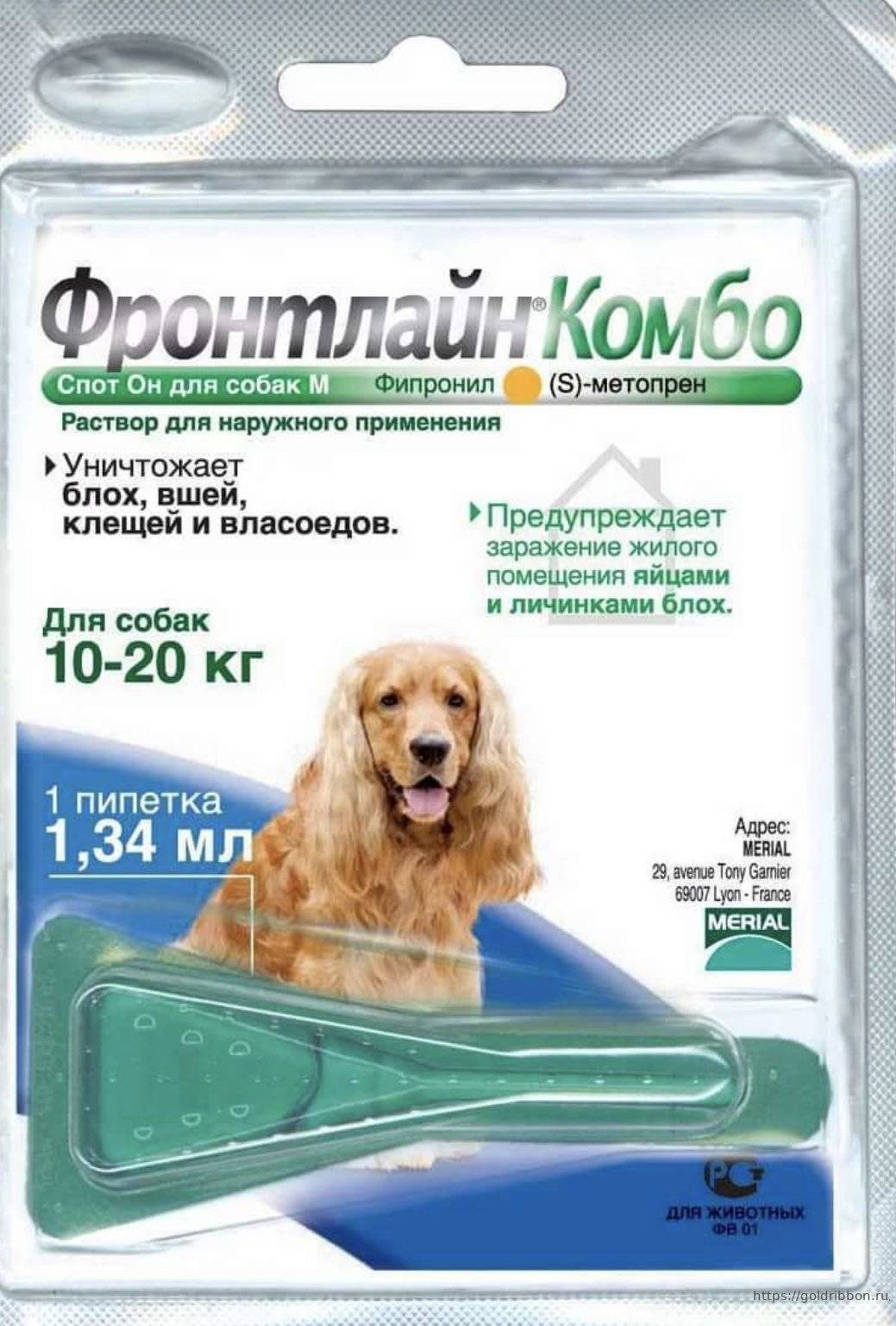 Как защитить собаку от клещей народными средствами
