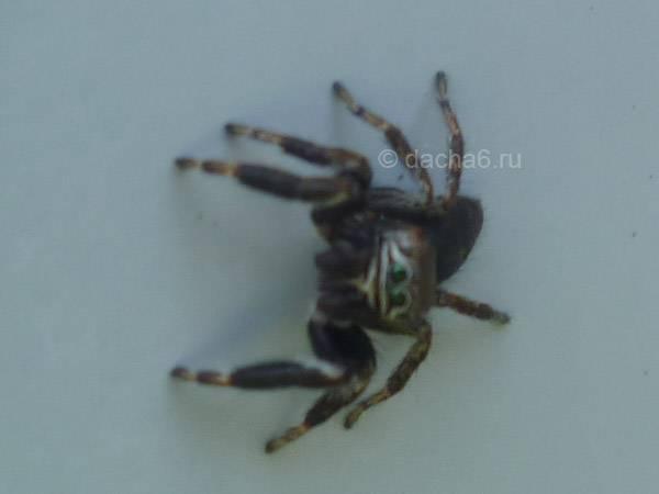 Беспокоят пауки в квартире? мы знаем что делать!
