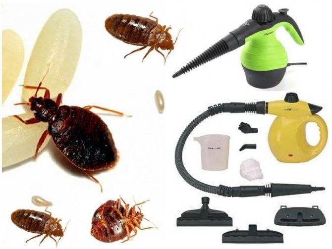 Парогенератор от клопов: метод самостоятельного уничтожения насекомых горячим паром