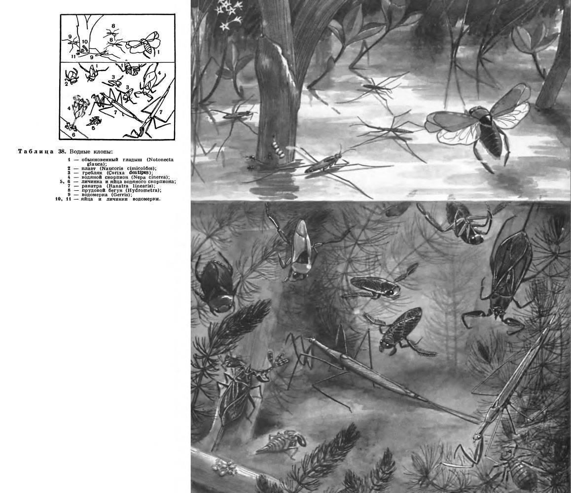 Объект исследования 2. методы исследования 3. результаты исследование живых организмов в воде буржуйского пруда 4. результаты исследования прибрежной. - презентация