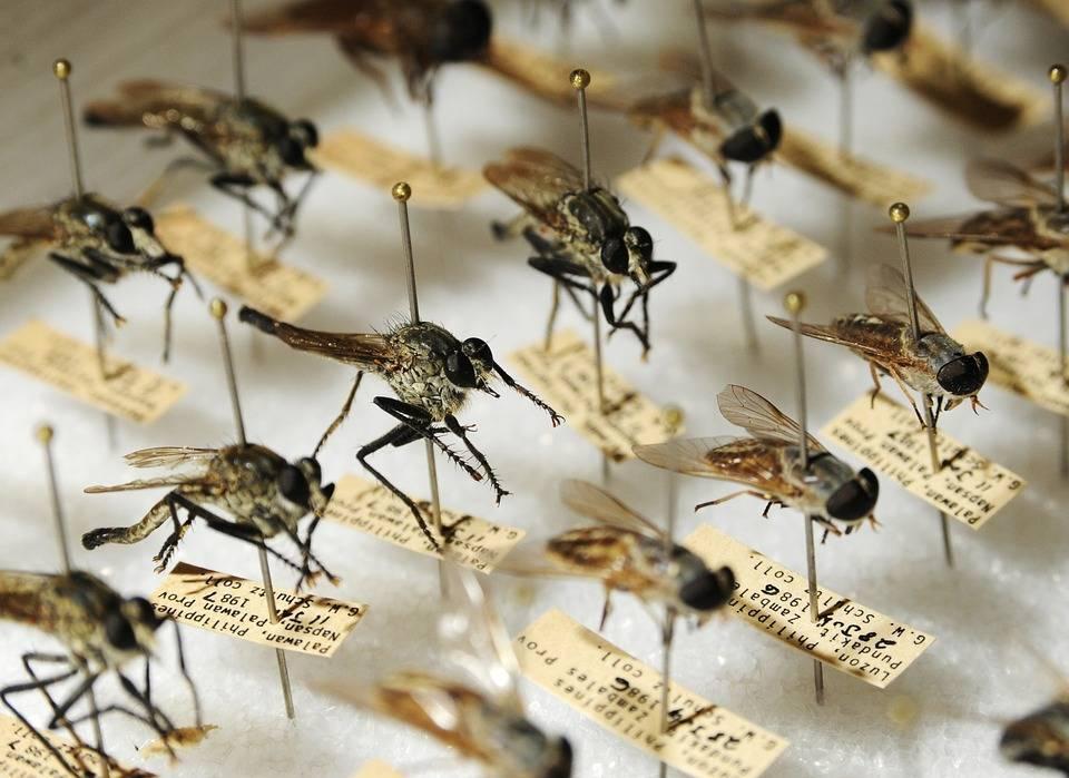 Есть ли в крыму комары — а в крыму есть комары?