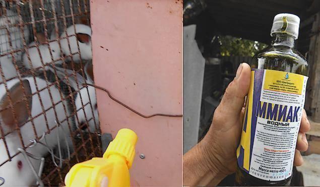 Уничтожители комаров для улицы
