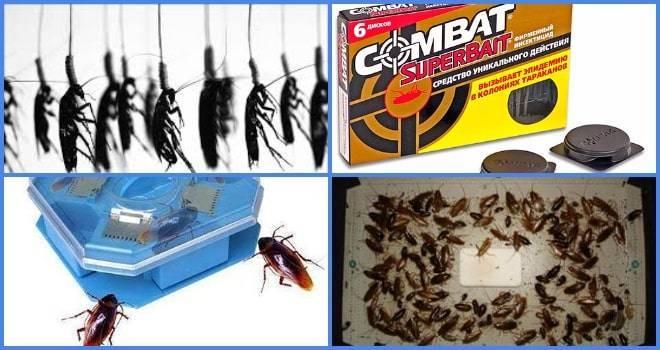 Ловушки для тараканов – безопасное средство избавления от насекомых
