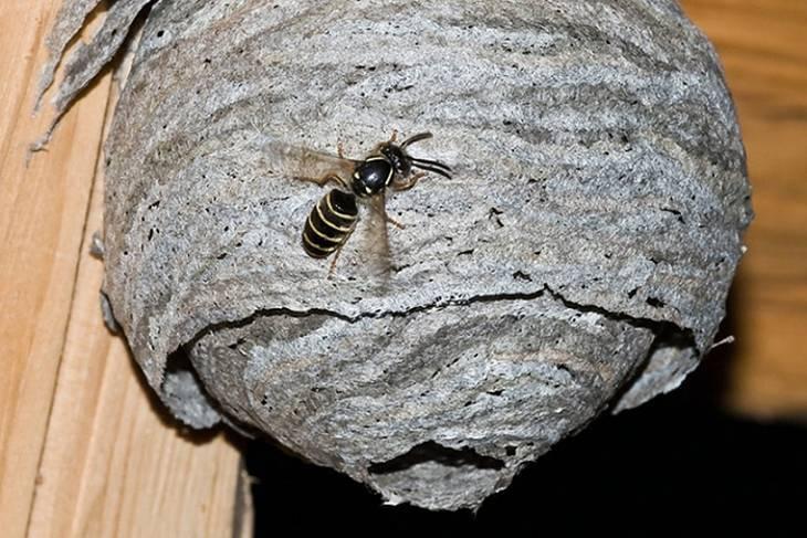 Как избавиться от осиного гнезда в частном доме или на даче