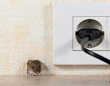 Клей от мышей и крыс: инструкция по применению