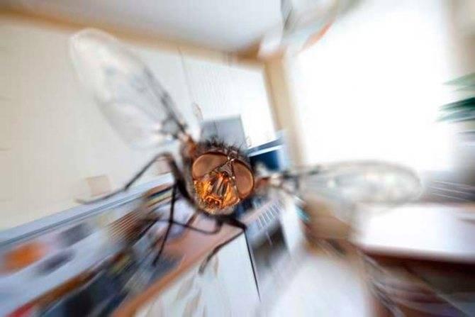 Откуда берутся мухи в доме зимой. причины появления больших мух в доме к чему оживает муха зимой