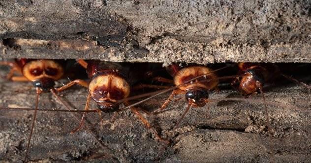 Интересные особенности тараканов — 12 фактов
