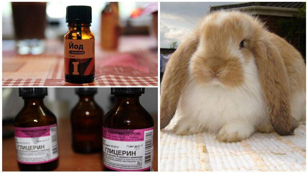 Ушной клещ у кроликов — описание, симптомы, лечение