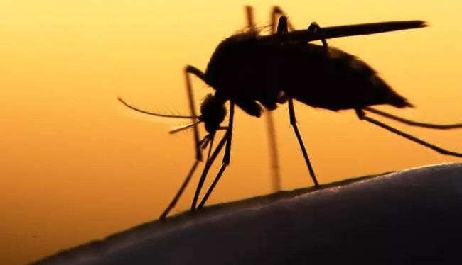 Чем опасны малярийные комары, какие заболевания могут развиться при укусе