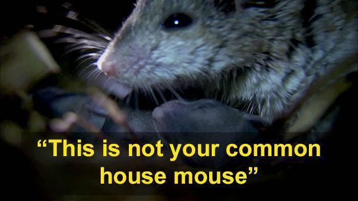 Кто из животных ест мышей