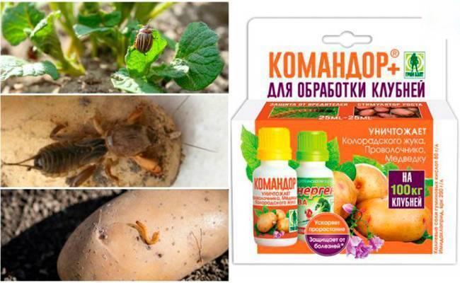 Инсектицид командор против колорадского жука: инструкция по применению, фото и отзывы. методы борьбы с колорадским жуком на огороде