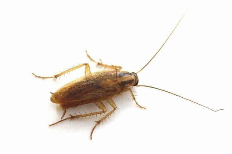 Самодельные ловушки для тараканов