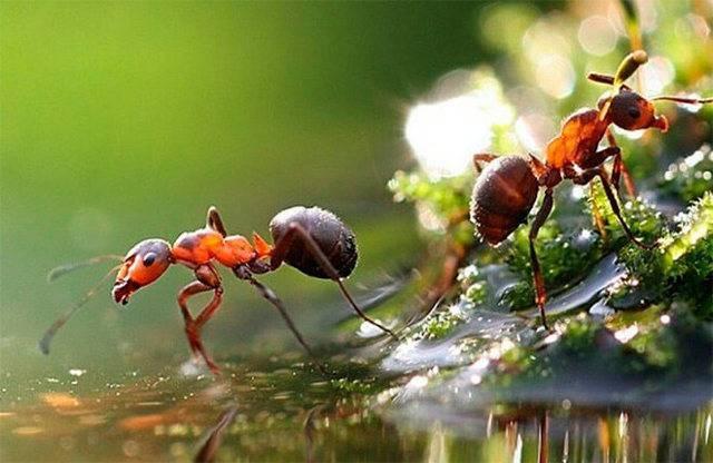 Как и где зимуют муравьи: спят в муравейнике или трудятся?