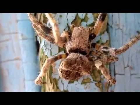 Топ-10 самый страшный паук в мире