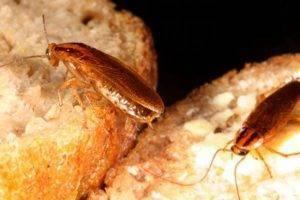 Что делать, если от соседей бегут тараканы и клопы
