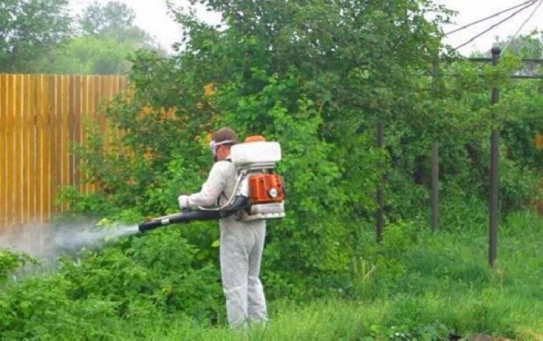 Как избавиться от комаров на дачном участке: рейтинг самых эффективных методов