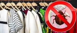 Могут ли клопы постоянно жить в одежде и как их вывести
