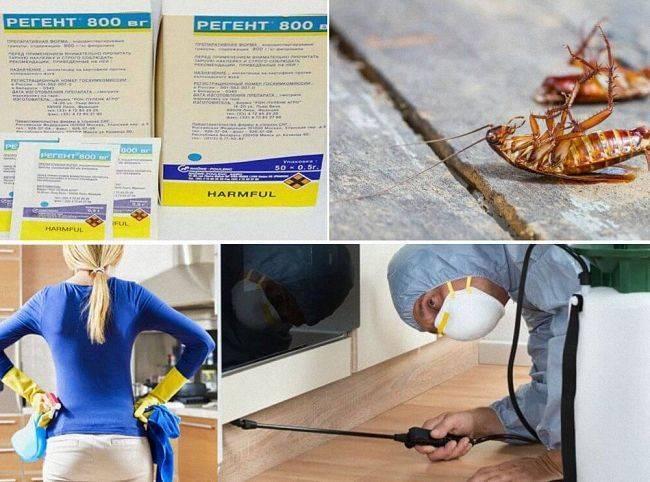 Регент от колорадского жука: преимущества,  инструкция по применению, преимущества средства, отзывы