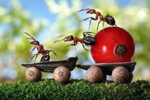 Как избавиться от рыжих муравьев в квартире или частном доме?