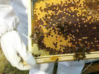 Последствия вымирания пчел